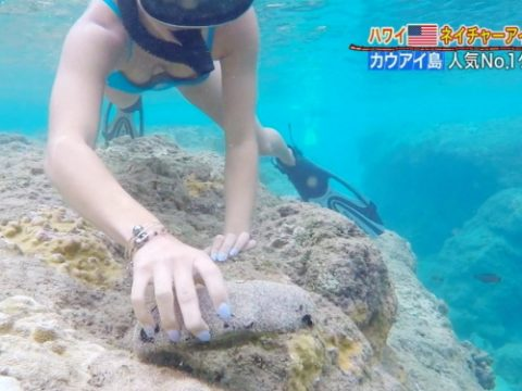 """【画像】水中カメラの映像が""""ハプニン具""""してるのに割とスルーされて放送される件(22枚)・1枚目"""