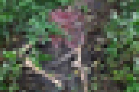 (閲覧注意)森の中で発見された「女性」の姿が常軌を逸してる。恋人に一体何が…(写真)