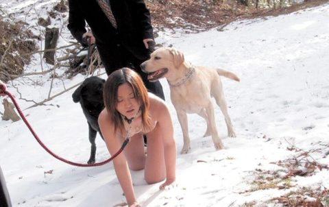 ワイの雌犬の散歩風景をご覧くださいwwwwwwwwwwwww(画像24枚)・12枚目